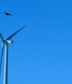 Obama's new wind farm rules would permit thousands of eagle deaths