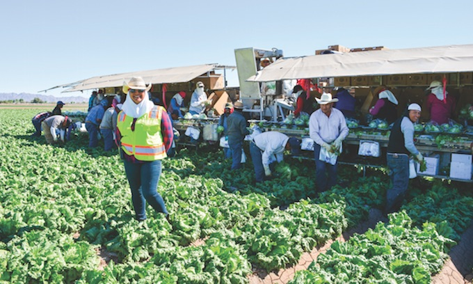 Report: Farms adjusting to life without illegal alien labor
