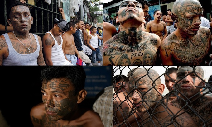 Democrat defense against Trump's comment that MS-13 are 'animals' overshadows border security push