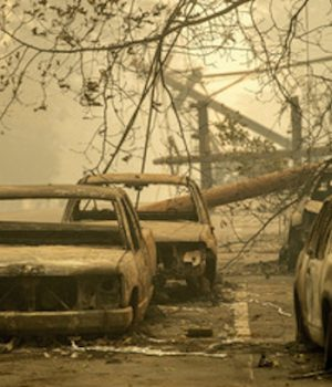 California's fire management policies are 'blithering idiocy'