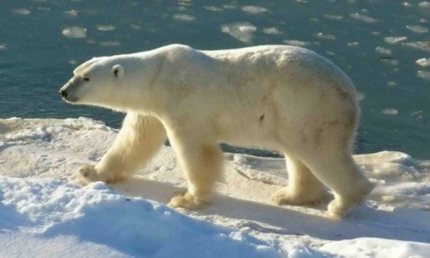 Gore's no Arctic ice in 5–7 yrs. prediction a bust