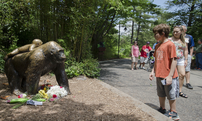 Police to probe circumstances surrounding shooting of zoo gorilla