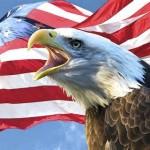 eagleseven