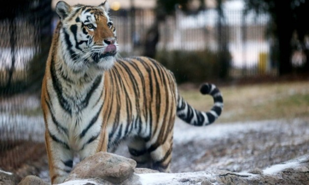 First Redskins, Now LSU Tigers Are Targets of PC Lunatics