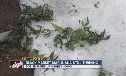 Legalized marijuana has brought huge black market problems to Colorado