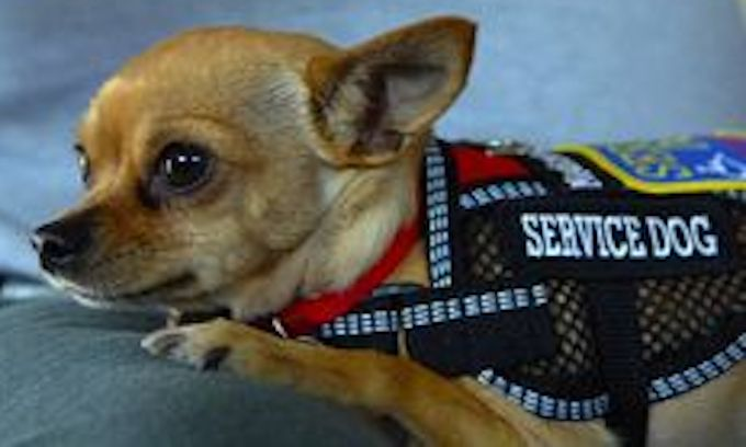 Is that a real service dog? Under federal law, you can't even ask