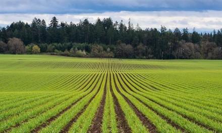Trump administration unveils $12B aid for farmers hurt by tariffs