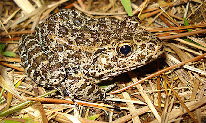 Supreme Court weighs government's power over private land to protect a frog