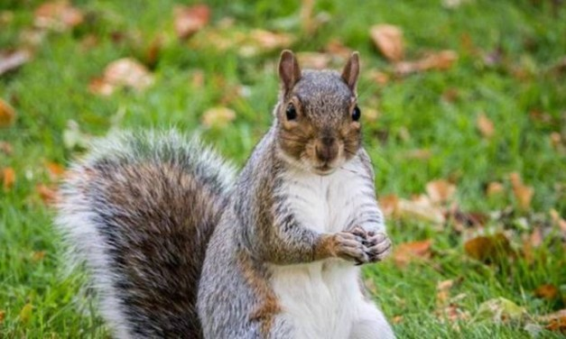 Daughter of woman whose 'emotional support' squirrel got her kicked off flight says she's 'upset and angry'