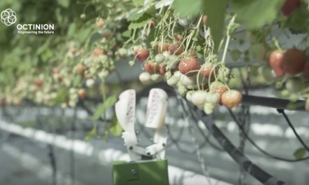 Florida strawberry farmers using robots to pick fruit, control mildew