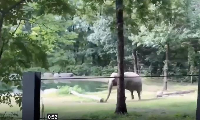 Ocasio-Cortez wants zoo to release elephant to sanctuary
