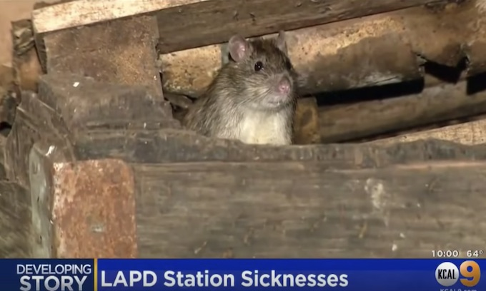 Democrat rule has brought trash heaps, rats, typhus and more to California cities