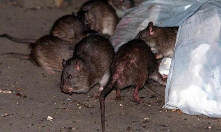 Bill de Blasio slammed for growing trash, rodent problems