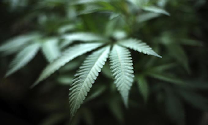 San Francisco: Marijuana an 'essential medicine,' dispensaries may operate amid coronavirus lockdown