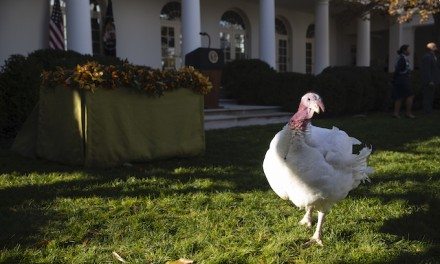 Trump pardons Thanksgiving turkey; will Schiff subpoena Butter?