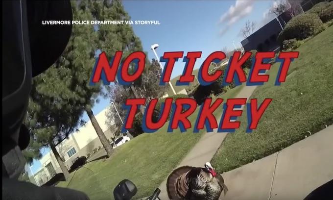 Jive-talking turkey trashes ticket, saves speeder from cop
