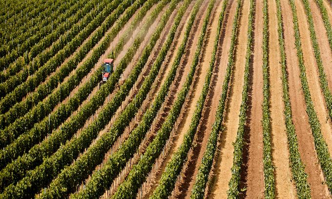 Virus Shutdown: Farmers destroy crops grown for restaurants, hotels