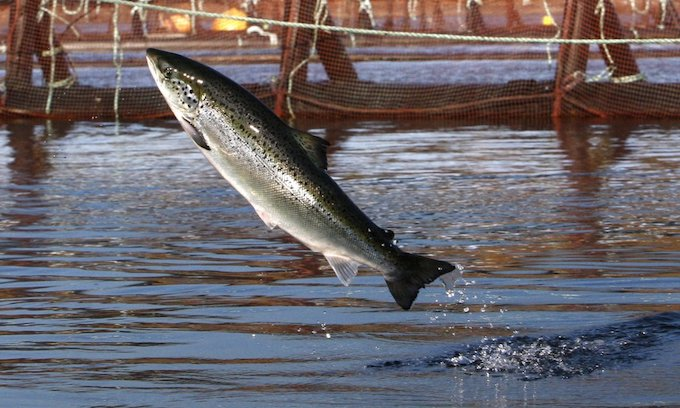 Trump eyes aquaculture boom, but environmentalists dig in to block it