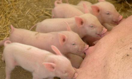 Team-left 'Covid' Bill is Full of Pork